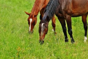 horses-1427557_1280